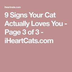 9 Signs Your Cat Actually Loves You - Page 3 of 3 - iHeartCats.com