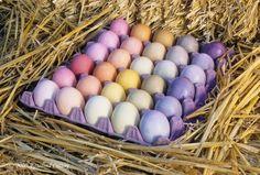 Natural Easter egg dyes...