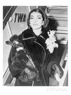 Maria Callas, Holding a Pet Poodle Arrives at New York's Idlewild Airport in 1958 Photo at AllPosters.com Maria Callas, York Airport, Lisbon Airport, French Poodles, Standard Poodles, Animal Photography, Paris Photography, Vintage Photography, Poodle Puppies