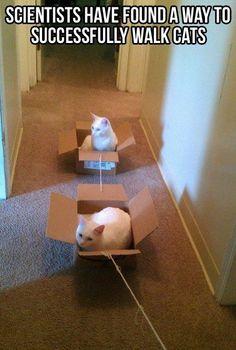 How to walk a cat @Hillary Platt Bandley Platt Bandley Platt Bandley Platt Bandley Platt Bandley Gelder