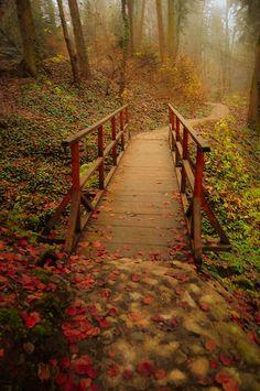 ~~wonderland II ~ a foggy autumn evening in the forest by *LuizaLazar~~