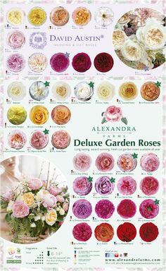 Beautiful Rose Flowers, Amazing Flowers, Fresh Flowers, Colorful Flowers, Flower Chart, Rose Varieties, French Beaded Flowers, Flower Names, David Austin Roses