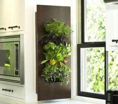 Indoor vertical garden, herb garden