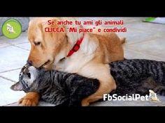 Cats and dogs friends FbSocialPet » Canale Video » FbSocialPet: social network per cani, gatti, cavalli, tutti gli animali