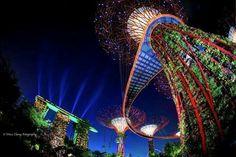 Supertree grove& Marina Bay Sands, Singapore.