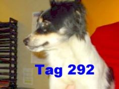 Happy Trails Of Columbus GA. Page Liked · June 1 ·    Type: Dog Breed: Papillon Sex: M Age: Adult Color: Blk/Wht Size: Small Coat: Long Run # P-3 Log ID: 06012015-009 Tag # 292 Date Impounded: 06/01/2015 Date Adoptable: 06/07/2015 Area Found: 23Rd St