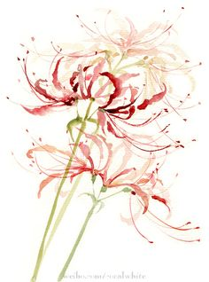 Bỉ ngạn hoa - loài hoa mọc ở Minh giới