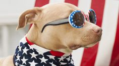 Fourth of July Dog Safety Tips – Beach Doggies