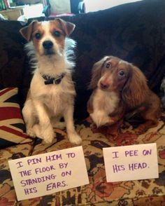 I love dog shaming.