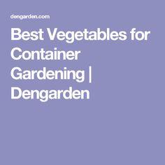 Best Vegetables for Container Gardening   Dengarden