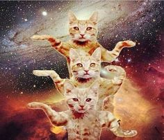 Cats in Space Blank Template - Imgflip Funny Cats, Funny Animals, Cute Animals, Psychedelic Art, Crazy Cat Lady, Crazy Cats, I Love Cats, Cool Cats, Trippy Cat