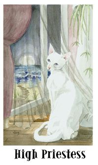 Tarot cat's eye - La Papesse