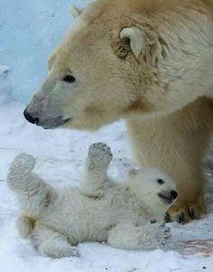 Polar bear play with her baby ♡