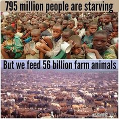 Kindness is the only religion Eating meat is a major cause of world hunger! In the US, 157 million tons of cereals, legumes and vegetable protein – all suitable for human consumption – is fed to livestock to produce just 28 million tons of animal protein in the form of meat! #GoVegan #AnimalRights #MeatyMarch #veganlife #vegan