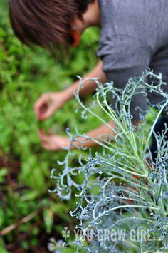 Spigarello Leaf Broccoli