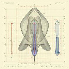 Inorganic Flora by Macoto Maruyama  Latyrus odoratus L - front view - ow