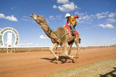 Charleville Camel Races - Charleville, Australia