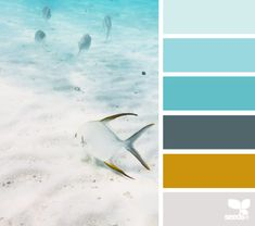 color school Color Palette by Design Seeds Colour Pallette, Colour Schemes, Color Combos, Color Patterns, World Of Color, Color Of Life, Deco Marine, Color Harmony, Design Seeds