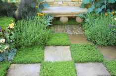 The Herbalists Garden - Herbs & paving in a chequer board pattern -