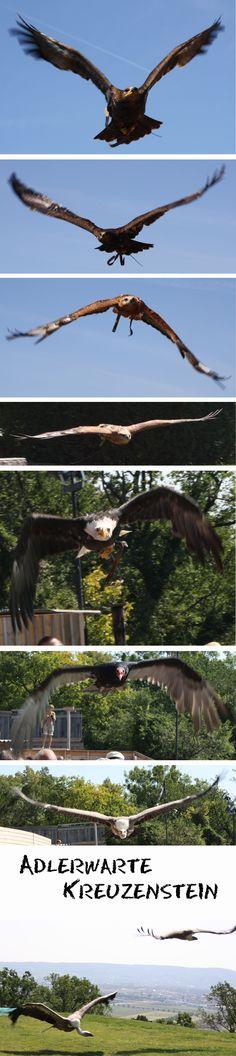 Adlerwarte Kreuzenstein, a falconry in Austria. some snapshots I made today.