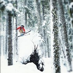 The usual ingredients for fun: powder, trees, pillows and skis.