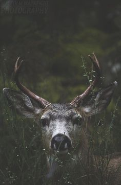 Image uploaded by Diana Leal. Find images and videos about vintage, grunge and nature on We Heart It - the app to get lost in what you love. Beautiful Creatures, Animals Beautiful, Cute Animals, Women's Shooting, Nature Aesthetic, Nature Animals, Wild Animals, Animal Photography, Camping Photography