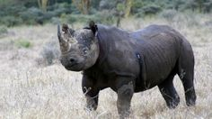 First two months sees 146 rhino killed - Mail & Guardian Online