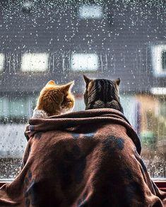 """""""Après la pluie, le beau temps""""(アプレ・ラ・プルイ、ル・ボー・トン)  意味は「雨がやんだあとは、良い時が訪れる」  「やまない雨はない」ですね。今どんなに辛い時でも、雨(辛いこと)は必ずやんで、良い時が訪れます。"""