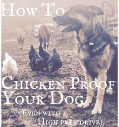 Train your dog to be