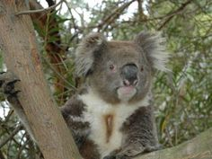 Hanson Bay Sanctuary in Kangaroo Island, Australia. Um, cute furry koalas and kangaroos? Yes, please.