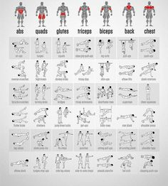 Muscle Group Workouts