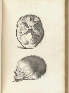 Cheselden, William (1688-1752). Osteographia, or The anatomy of the bones