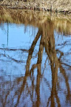 Jemina Staalon Veden vuosi 2: Haltialassa veteen heijastuu