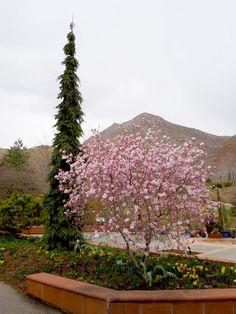 Beautiful tree from Red Butte Garden, SLC, Utah