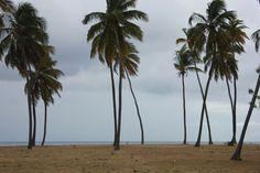 Un autre joli tapis de sable à Ffreyes Beach avril 2015