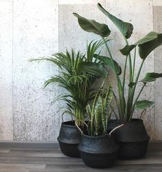 Barro Basket Black is part of Living room plants decor - Barro is a Spanish word meaning 'mud', but it's not just their name that makes these baskets so exotic They've been handwoven out of seagrass