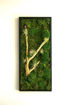 Preserved Moss Wall Art With A Decorative Frame Applied To The Picture Is Bun And Artificial Foliages Combined Together