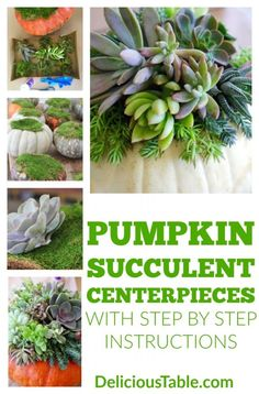 Pumpkin Decorating Idea: Succulent Centerpieces are easy, gorgeous, and last 2 months. Fall centerpiece for Autumn decor or a Thanksgiving gift! Succulent Centerpieces, Pumpkin Centerpieces, Thanksgiving Centerpieces, Diy Centerpieces, Thanksgiving Gifts, Thanksgiving Recipes, Thanksgiving Quotes, Thanksgiving Appetizers, Thanksgiving Outfit