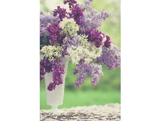 Hey, I found this really awesome Etsy listing at http://www.etsy.com/listing/151052195/lilac-flower-photo-vase-of-flowers