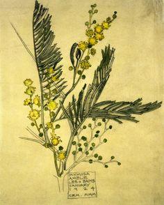 Charles Rennie Mackintosh  ~Mymosa, watercolour, 1924.