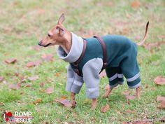 25, diy, italian greyhound pajamas, italian greyhound, jammies, pajamas, pjs, pattern, do it yourself, handmade, home made, homemade, hand m...