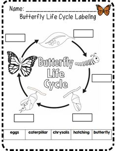 Butterfly life cycle labeling!