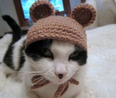 Pet Hat Bear Beanie Cat Hat Brown by Monarchdancer on Etsy, $15.00