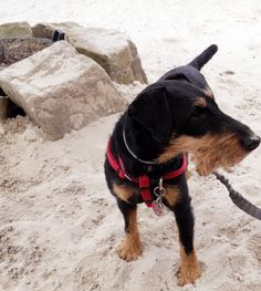 Bushcraft, Terriers, Animals, Hunting, Nice Asses, Animales, Animaux, Terrier, Animal