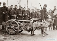 Belgian troops stand with their dog drawn cannons on their way to the Western Front. [1914]