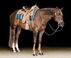 Hank is a hunk. You heard it here first! Cute Horses, Beautiful Horses, Western Pleasure Horses, Horse Fashion, American Quarter Horse, Horse Tack, Zebras, Equestrian, Westerns