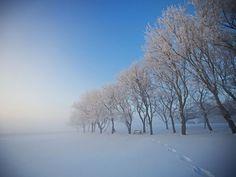 Alberta, Canada  Photo: Dwayne Holmwood    Beautiful frost at sunset in Alberta.