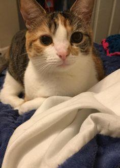 Reddit meet cinder my 1 year old cat. She's so cute