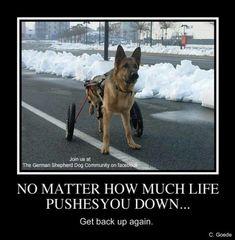 German Shepherd Hero! God bless you! ❤️