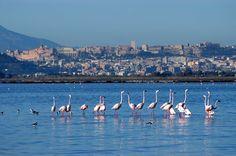 Fenicotteri+a+Cagliari-Sardegna.jpg (1600×1064)